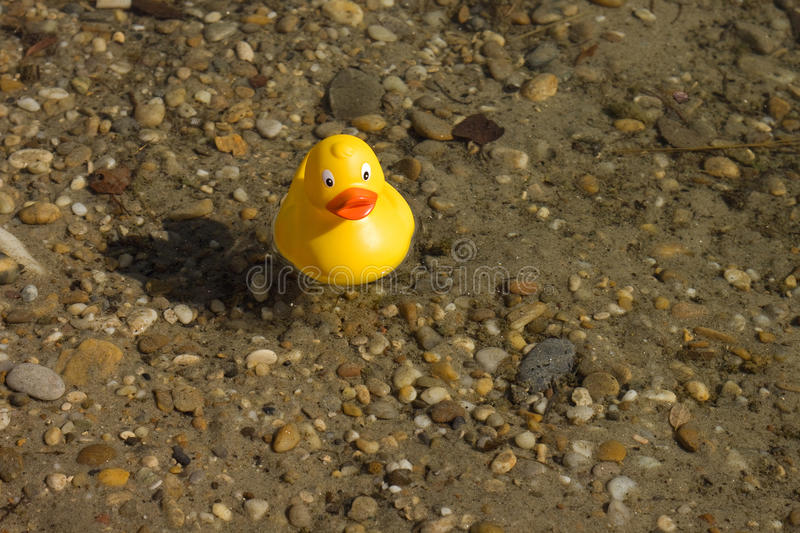 Duck stock image. Image of swimming, toys, opener, landscape - 11127119