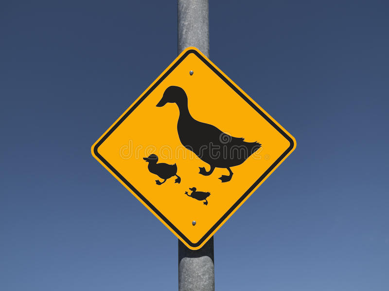 Duck Crossing stock photos