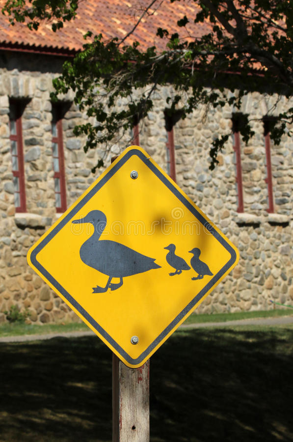 Duck Crossing photo stock