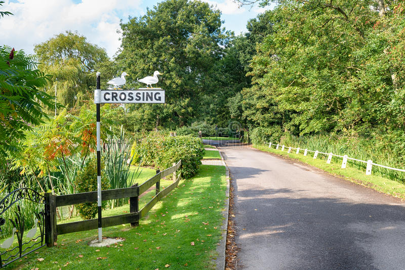 Duck Crossing sur la Norfolk Broads photo libre de droits