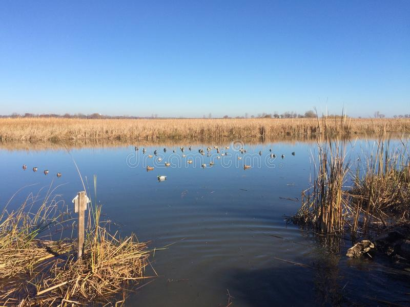 Duck decoy spread. Beautiful day duck hunting in the stock photo
