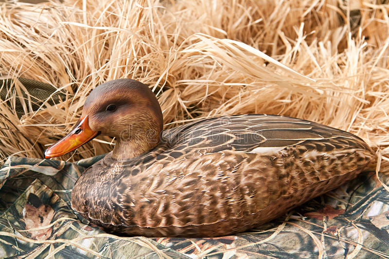 Duck decoy with stuffed and calls. Duck decoy with stuffed and some calls royalty free stock photography