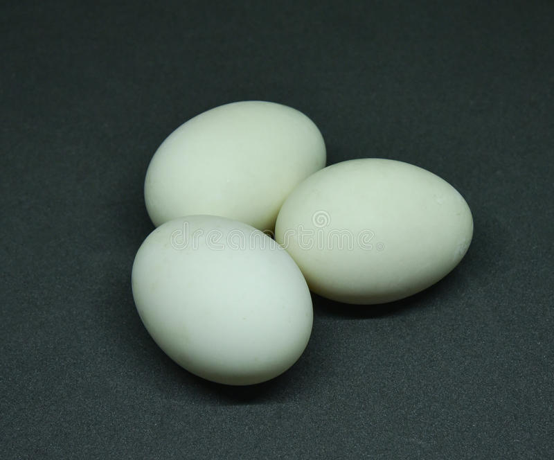 Duck egg stock images