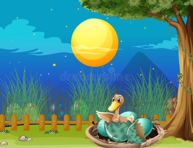 Duck hatching egg at night. Illustration vector illustration
