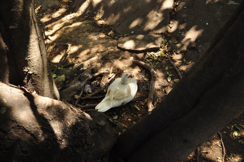 Duck Hiding Under calmo un albero immagine stock libera da diritti