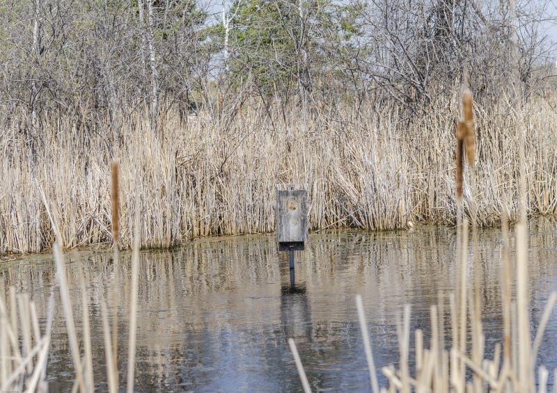 Duck House im Sumpf lizenzfreie stockbilder