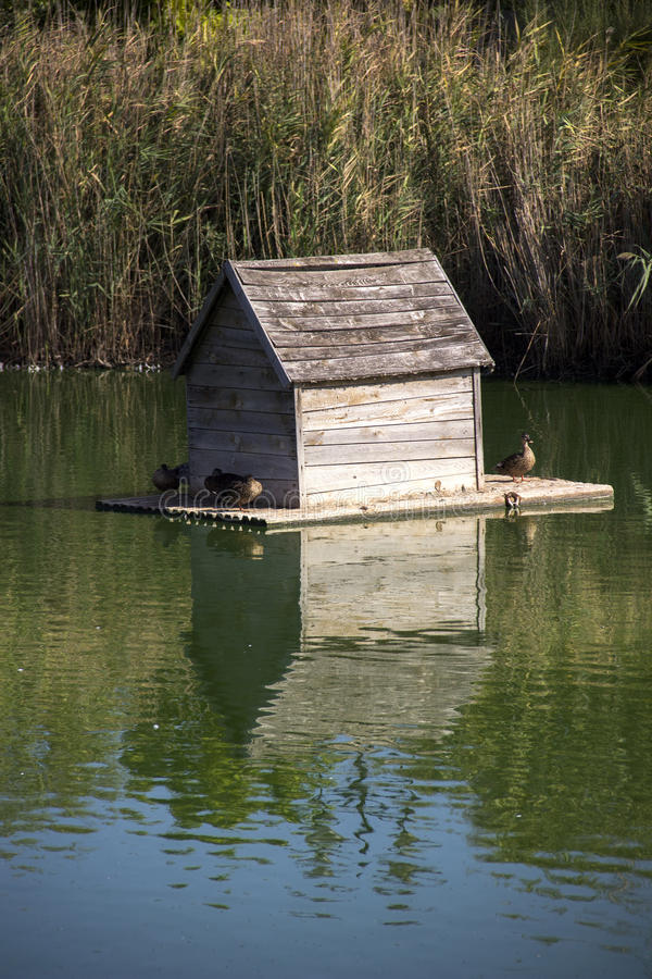 Duck house at the pond. Wooden duck house floating at the pond royalty free stock photos