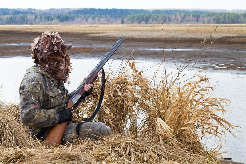Duck hunter climbs out of the hunting blind of reeds stock images