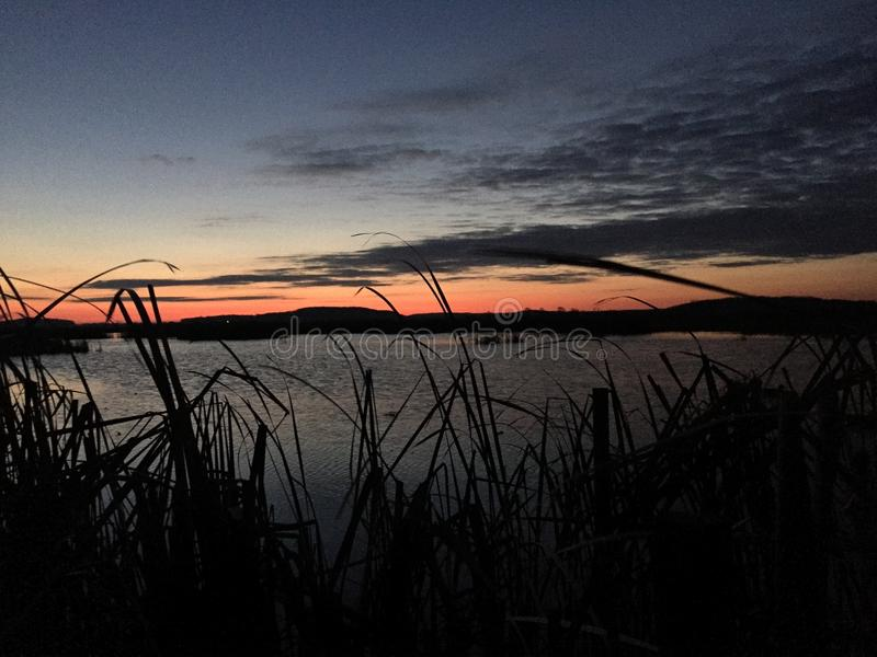 Duck hunting in Wisconsin. Cattails decoys sunrise stock image