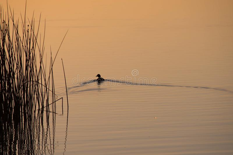 Duck Lake Sunset Contrast royaltyfria bilder
