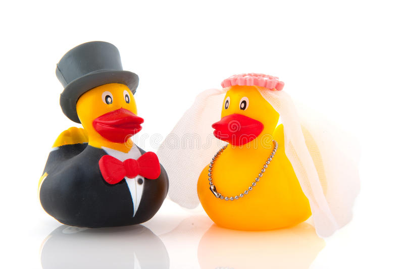 Duck marriage. Between two whole dressed ducks royalty free stock image