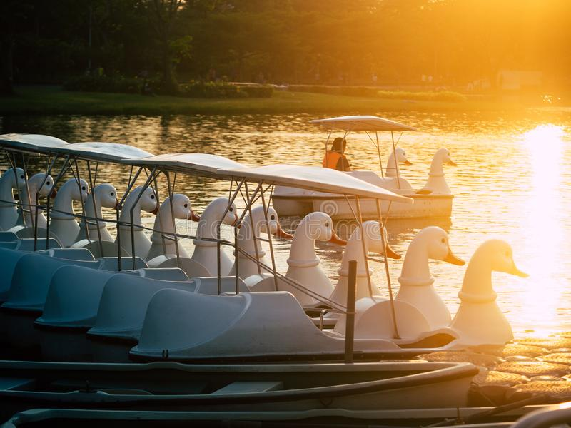 Duck pedal boat is lined up in the sunset. water bicycles locked on the lake in a sunny autumn day . stock image