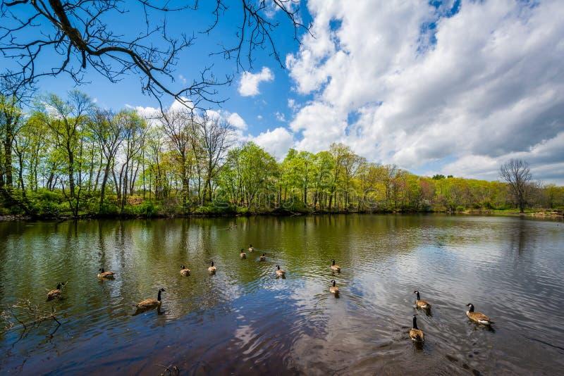 Duck Pond en el parque de Edgewood en New Haven, Connecticut foto de archivo