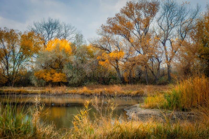 Duck Pond i hösten royaltyfri foto