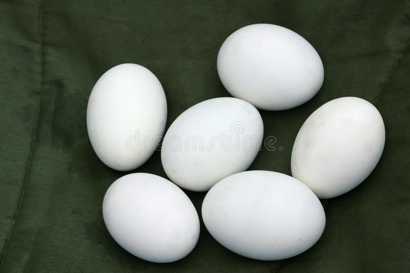Download Duck's egg stock image. Image of quack, eating, goosie - 21071439