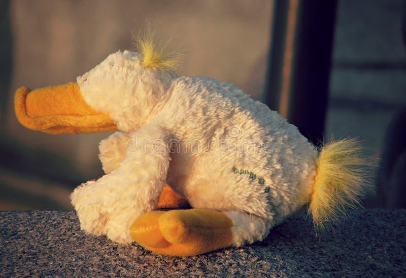 Download Duck Sitting Farcito A Mosca, Russia Immagine Stock - Immagine di farcito, ghiaccio: 56885179