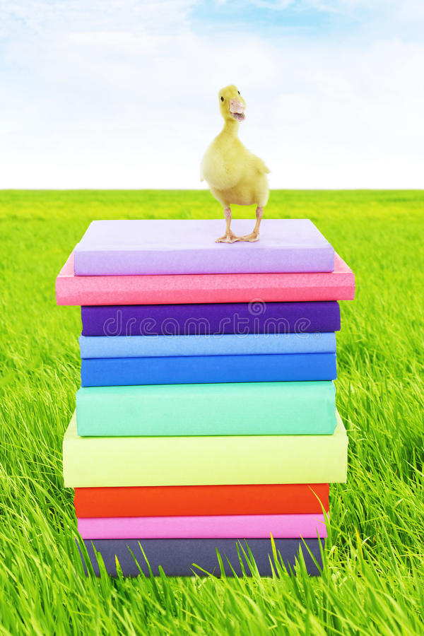 Download Duck Standing On Stack Of Books Stock Photo - Image: 24483766