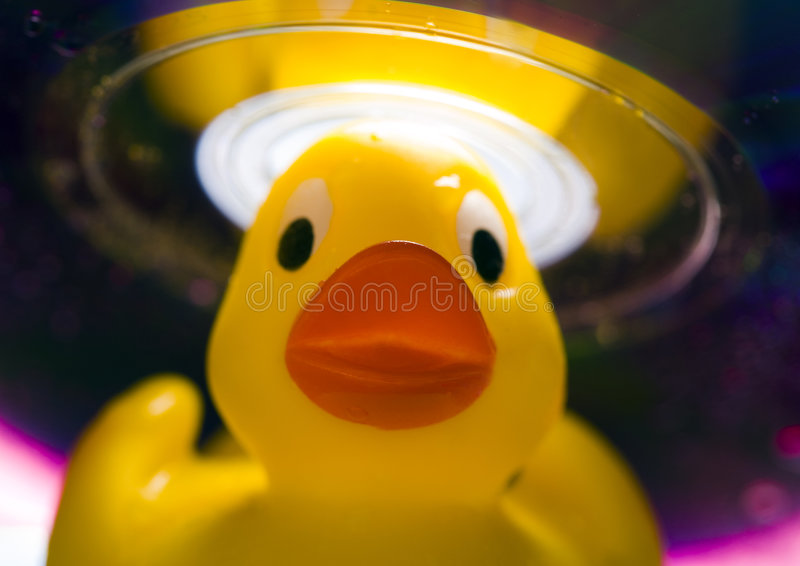 Duck the Toy stock photo