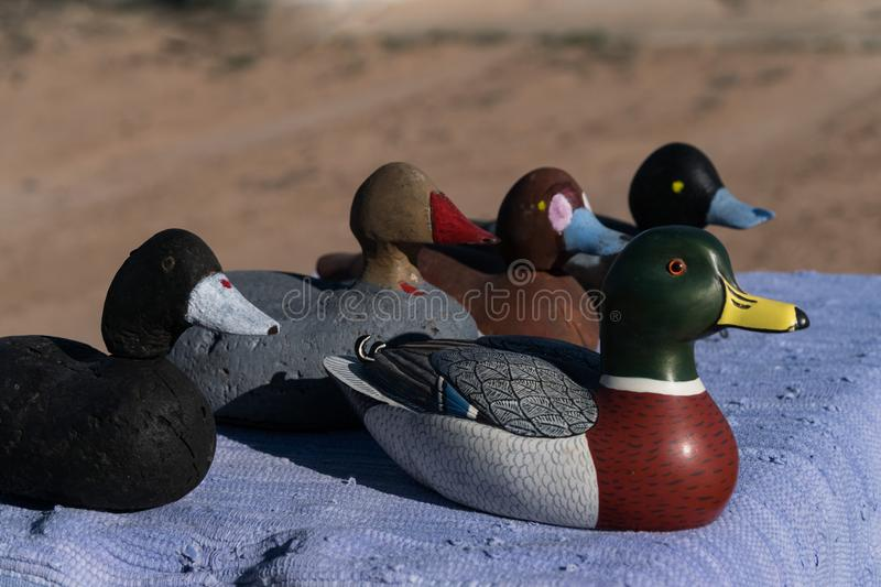 This duck is trying to be differant. It is good to be differant and stand out from the crowd usa background bird close-up craft crafted decoration decorative royalty free stock photos