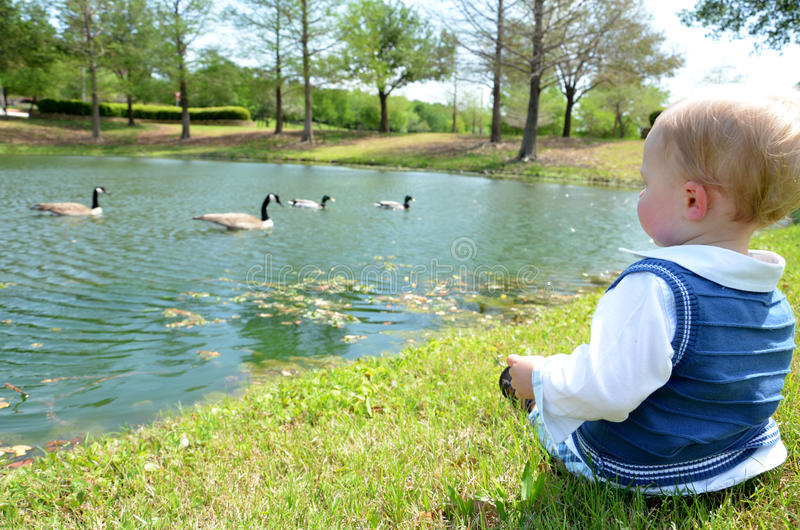 Duck Watching Stock Image