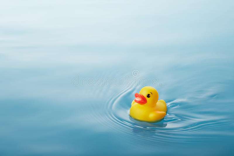 Download Duck stock photo. Image of yellow, reflection, swimming - 31974534