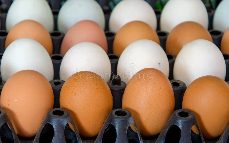 ducka ägg och bli rädd ägget i lådaask royaltyfri foto