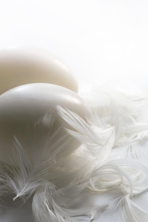 Ducka ägg och fjädrar på en vit bakgrund royaltyfri foto