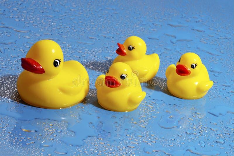 duckar gummi fotografering för bildbyråer