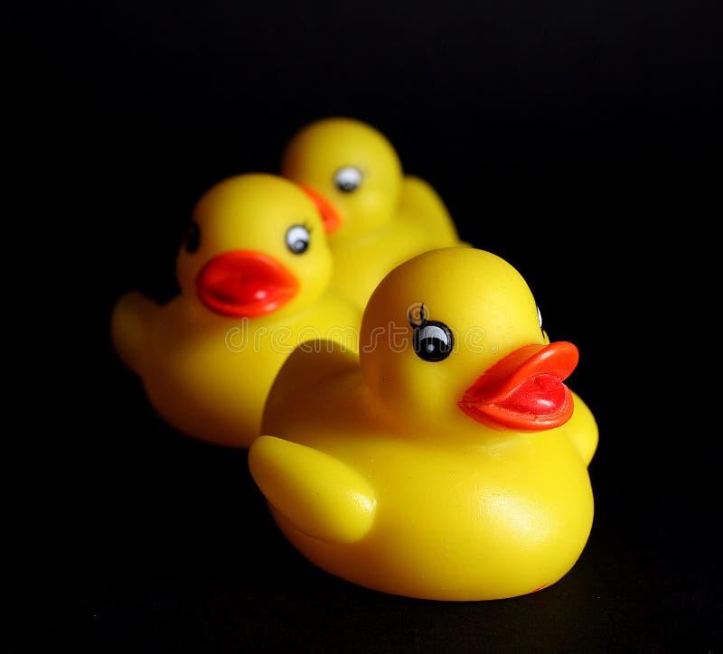 duckar gummi royaltyfria foton
