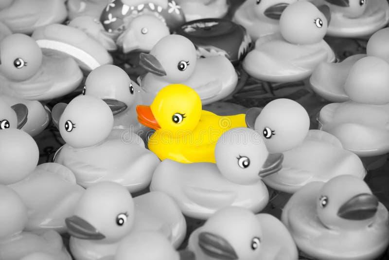 duckar gummi arkivfoto