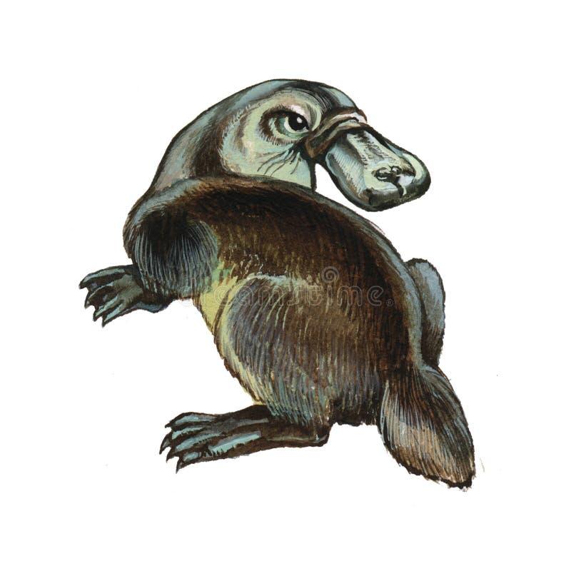 Duckbilled o Platypus ilustración del vector