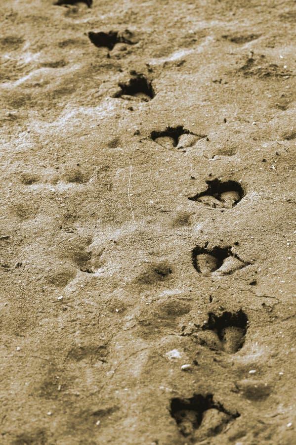 Duckprints stockfotografie