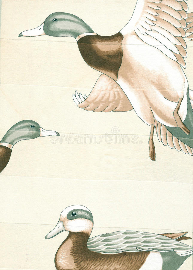 Download Ducks. stock illustration. Image of scarf, flight, autumn - 11515346