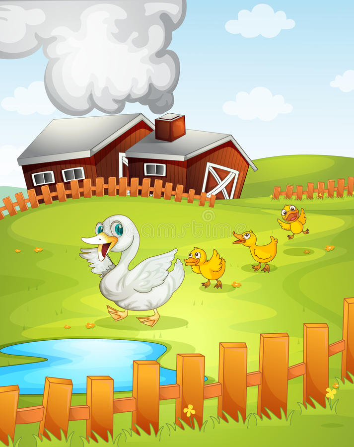 Free Ducks Royalty Free Stock Photos - 26264278