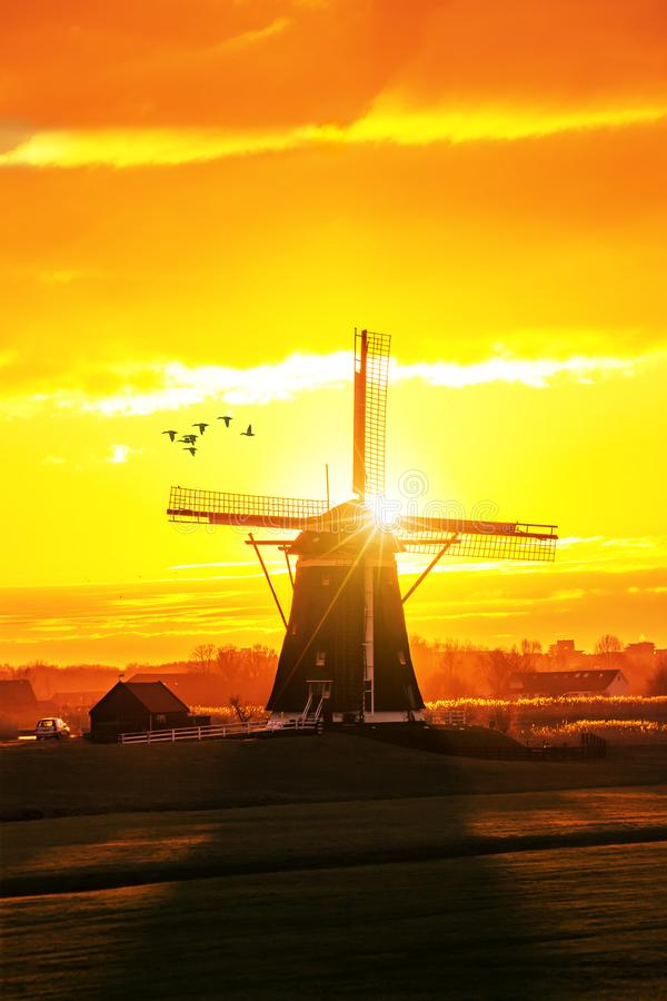 Ducks fying over a beautiful early morning and warm Kinderdijk s stock photo
