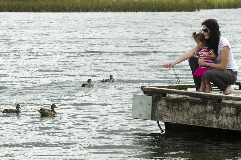 Download Ducks on a Lake stock photo. Image of outside, park, ducks - 23957598