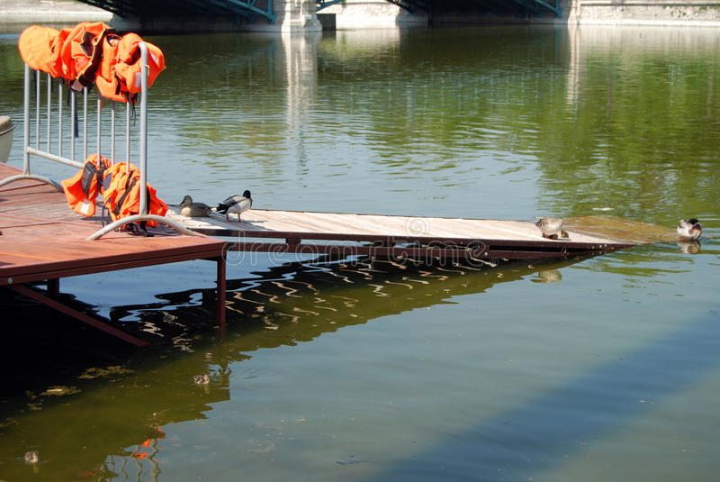 Ducks in the lake. Ducks at the lake with life jacket on the background, Budapest, Hungary stock photo