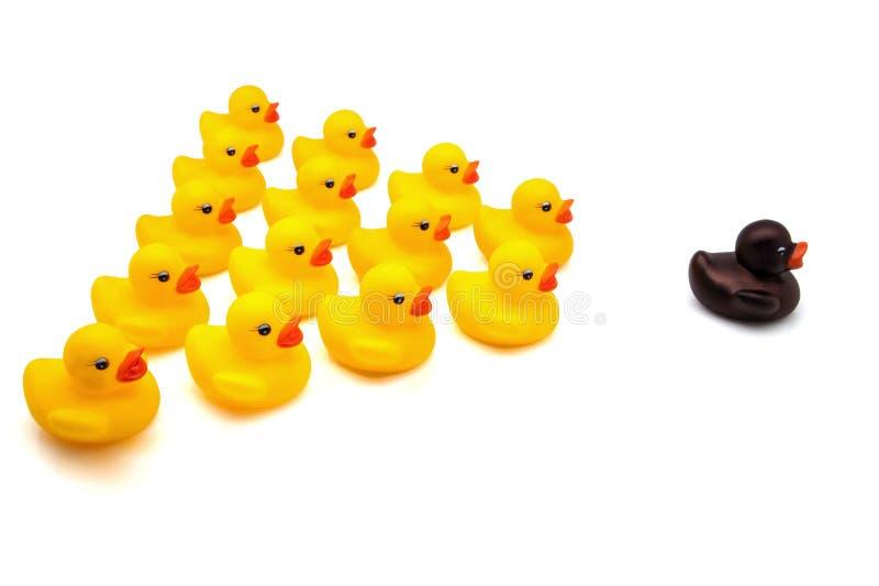 Ducks lo squadrone immagine stock