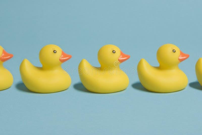 Ducks_in_a_row royalty-vrije stock foto's
