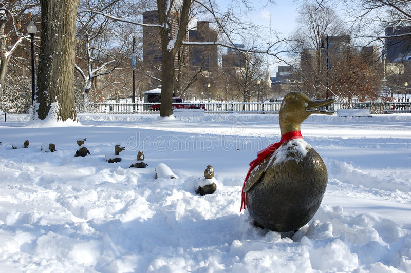 Ducks in Snow royalty free stock photos
