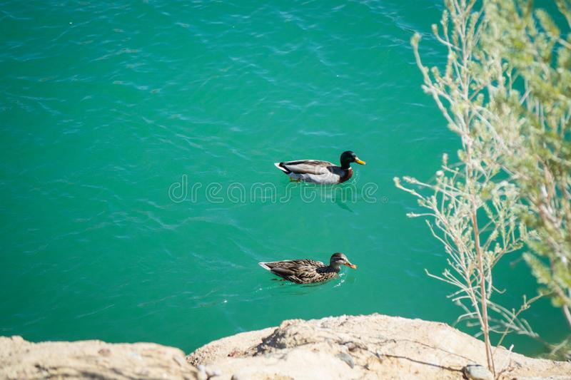 Ducks swimming at Balanced Rock Cove. What a view from a hot, sunny weather at Balanced Rock Cove royalty free stock photography