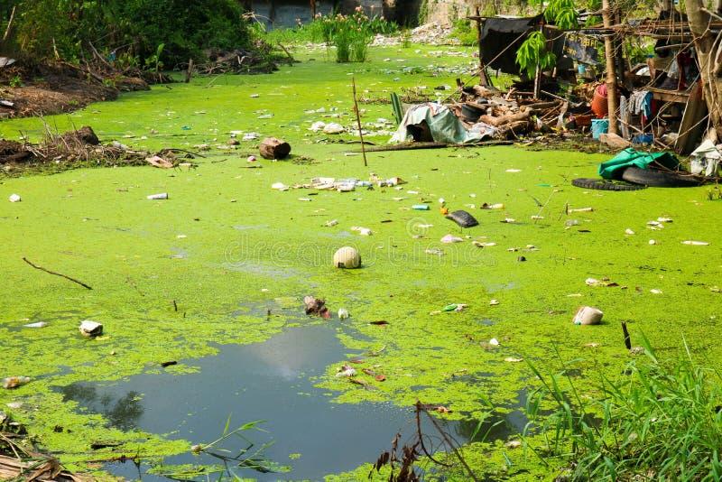 Duckweed как индикатор загрязнения воды стоковая фотография rf