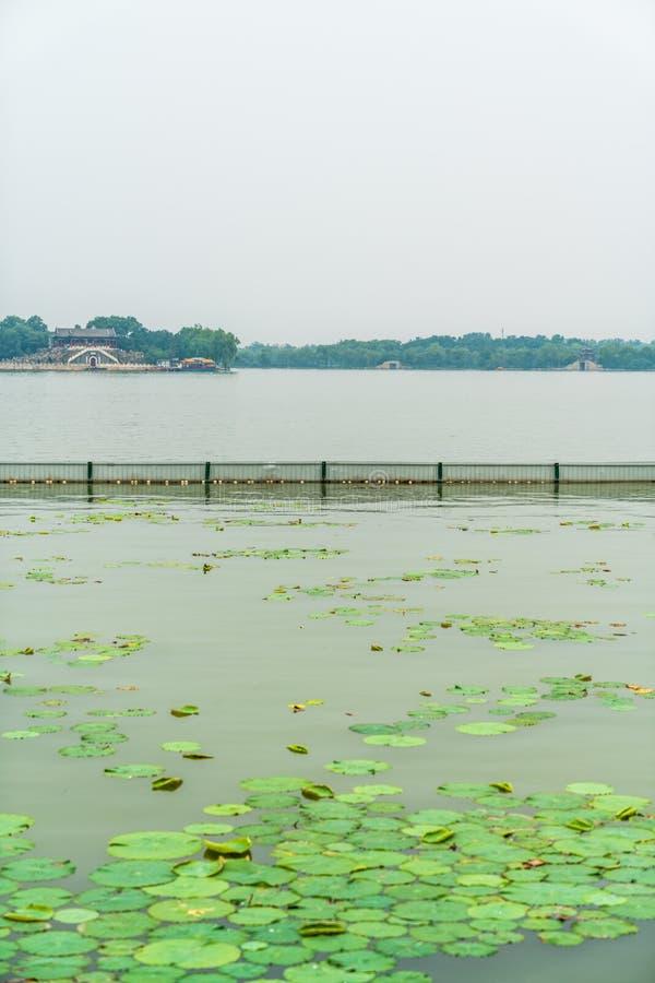 Duckweed na jeziorze w parku zdjęcia stock