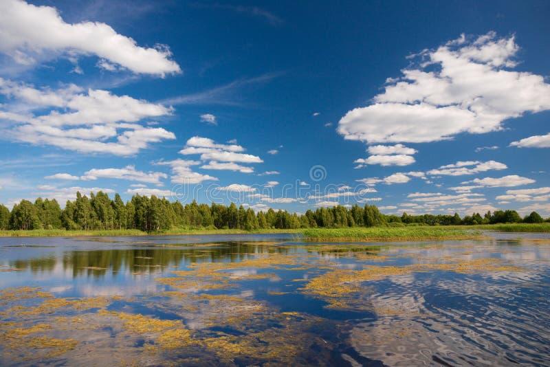 duckweed Typisk sommarsjöplats, Vitryssland Sommarlandskap med skogsjön och blå molnig himmel Sjölandskap i sommar arkivfoto