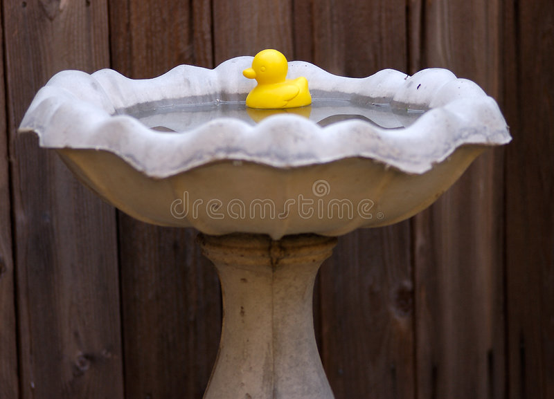 ducky λάστιχο στοκ εικόνες με δικαίωμα ελεύθερης χρήσης