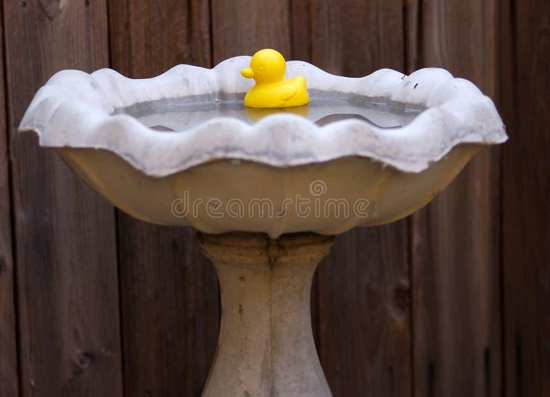 Download Ducky gummi fotografering för bildbyråer. Bild av reflexion - 37129