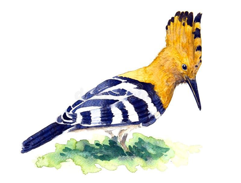 Dudek ilustracja wektor