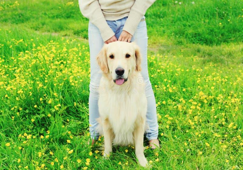 Dueño de la mujer que camina con su perro del golden retriever en el correo en verano fotografía de archivo libre de regalías
