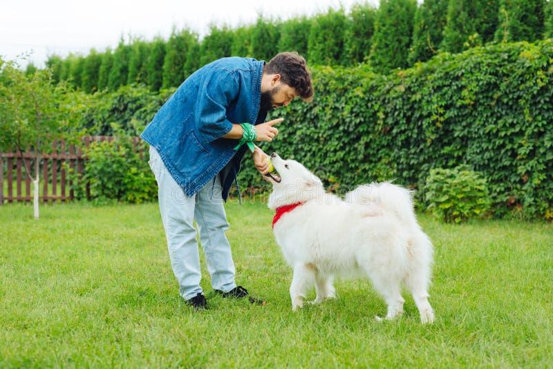 Dueño que cuida del perro esquimal blanco que calma su animal doméstico lindo fotografía de archivo