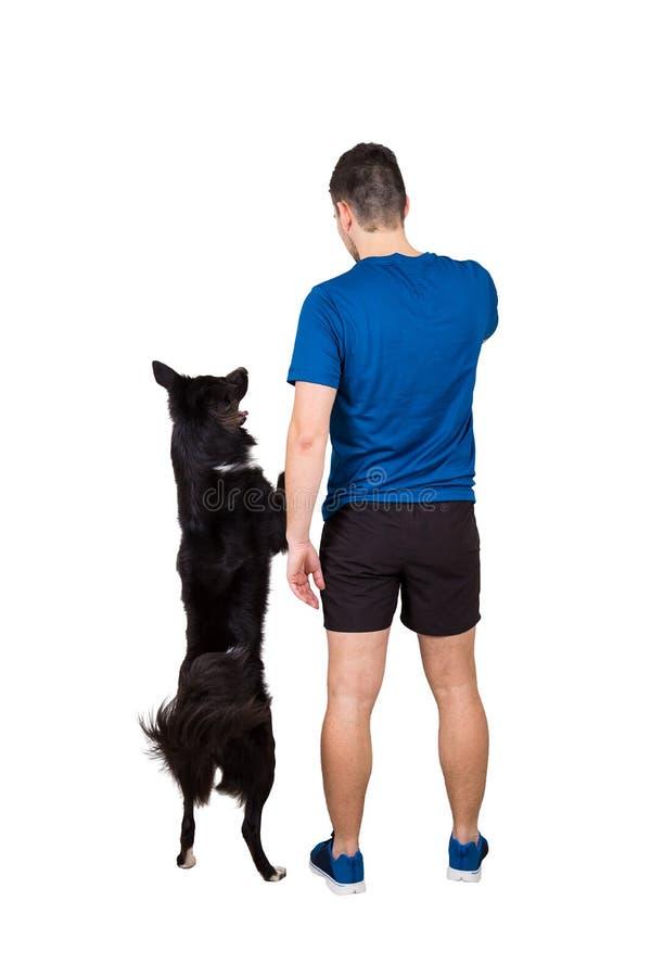 Dueño que entrena a su situación obediente del perro del border collie en las patas traseras aisladas sobre el fondo blanco Amist imagen de archivo